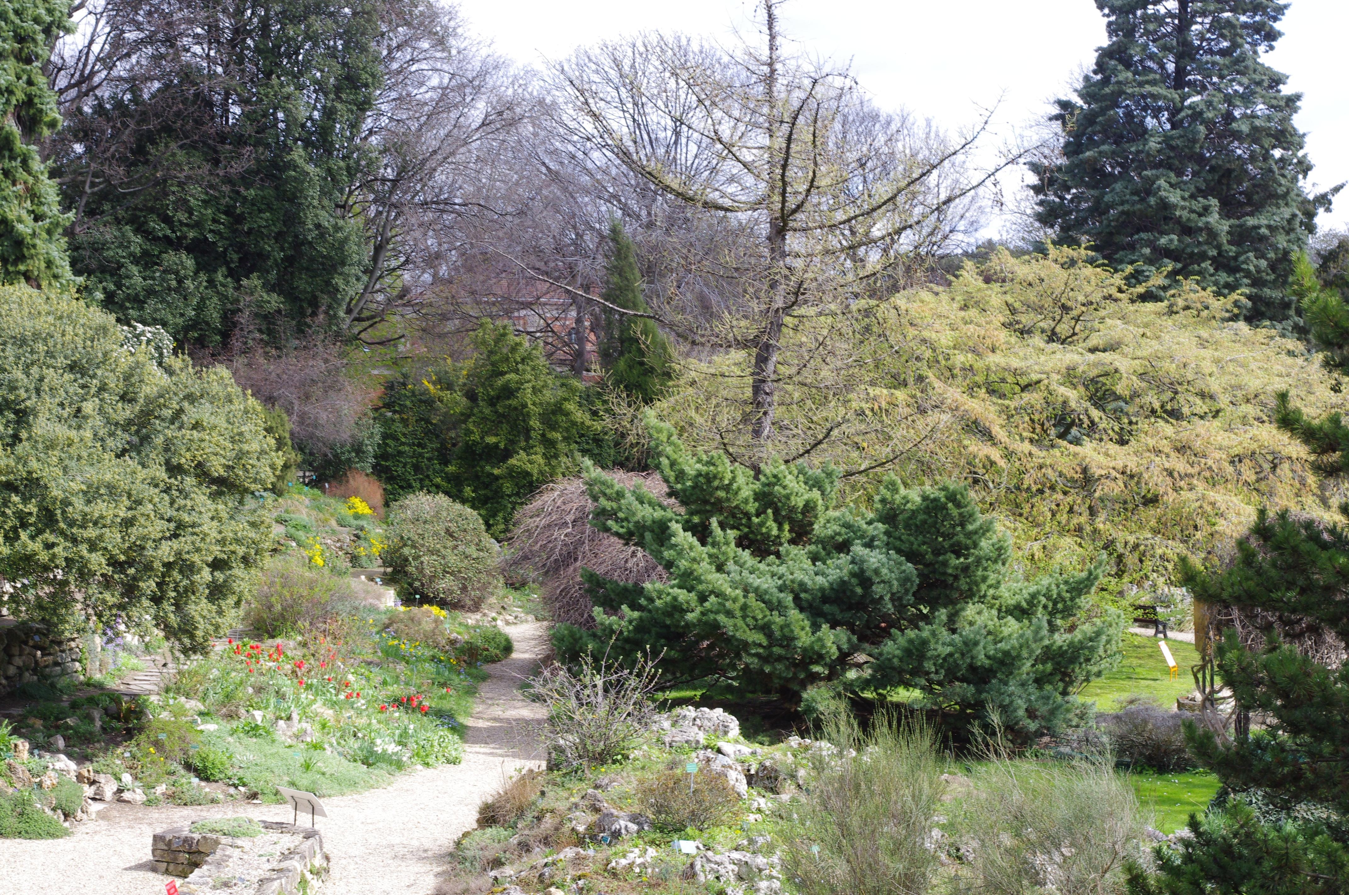 Jardin des plantes paris association des lecteurs de for Plante jardin